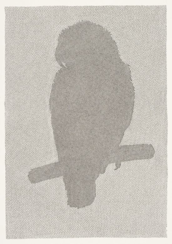 Click the image for a view of: Colin Richards. Parrot (African Grey) I. Triptych left panel (detail). 2009. Pen & ink. Image 319X218mm