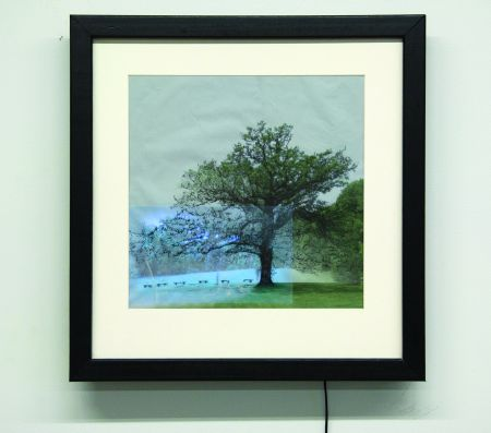 Click the image for a view of: The Great Oak. 2009. giclee print, LCD with video. edtion 3. 495 x 495 x 50mm