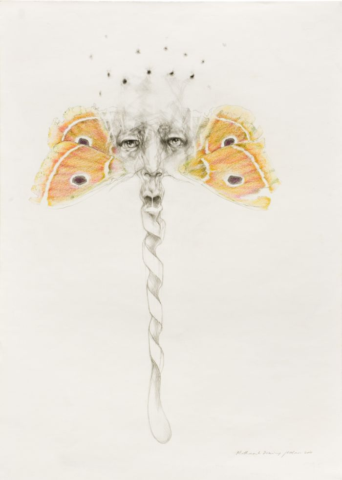 Click the image for a view of: Mothmask Drawing. 2011. Pencil and coloured pencil on paper. 696X498mm